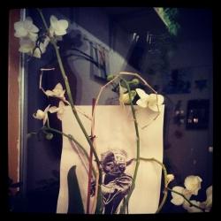 Yoda-Orchidee.